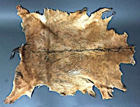 Tapis de peau de chèvre Marron et noir - France - 100x84 cm