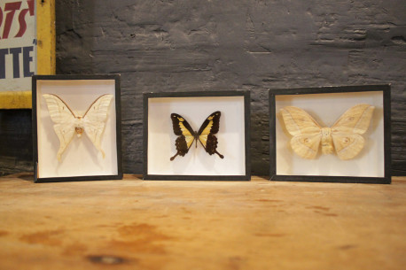 Triptique de cadre Papillons Ancien